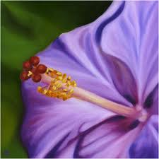 Reflections on Purple Hibiscus – Religion GoneAwry