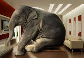 elephant_in_room_by_worshipgirl-d6hhq8x